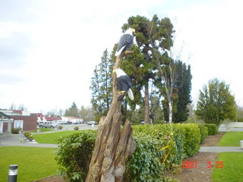 Two Eagles on a Tree Chainsaw Carving Sculpture