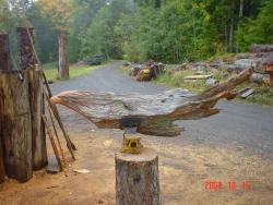 Old Growth cedar snag chainsaw art too